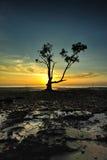 Mangroven-Ikone Stockbilder