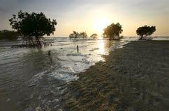 Mangroven, Maleisië Stock Fotografie