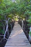Mangroven in Martinique stock afbeelding