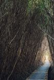 Mangroven nyplanterar med skog Fotografering för Bildbyråer