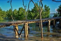 Mangroven nyplanterar med skog Royaltyfria Bilder