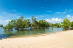 Mangroven nyplanterar med skog Royaltyfri Bild