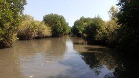 Mangroven nyplanterar med skog Arkivbild