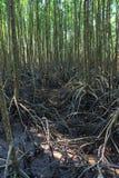 Mangroven nyplanterar med skog Arkivfoton