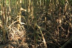 Mangroven nyplanterar med skog Arkivfoto