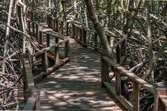 Mangroven nyplanterar med skog Royaltyfri Fotografi