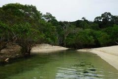 Mangroven op het strand van het eiland van Mogo Mogo, Saboga, Panama stock foto's