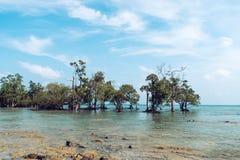 Mangroven in overzees stock afbeelding