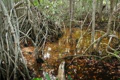 Mangroven in Progreso royalty-vrije stock fotografie