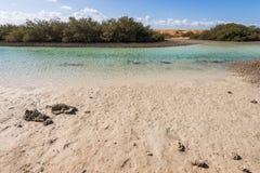 Mangroven in Ras Mohamed National Park stock foto