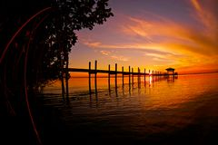 Mangroven-Sonnenuntergang lizenzfreies stockbild