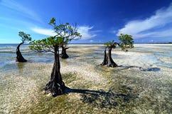 Mangroven tijdens de Eb Royalty-vrije Stock Foto's