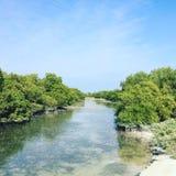 Mangroven von Al Thakhira Lizenzfreies Stockfoto