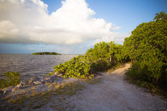 Mangroven-Weg-Ansicht in die Florida-Schlüssel lizenzfreies stockbild