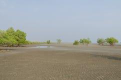 Mangrovenbäume auf der Gezeiten- Ebene stockbild