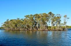 Mangrovenbäume in Queensland, Australien Lizenzfreie Stockbilder