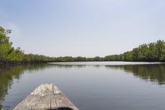 Mangrovenbäume und -fluß stockbilder