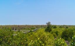 MangrovenBaum des Waldes im Meer Lizenzfreies Stockbild