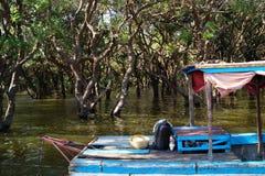 Mangrovendschungel stockfotografie