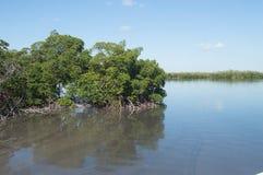 Mangrovenkonserve mit verschmutzten Wassern stockfoto