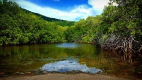 Mangrovensumpf Stockbild