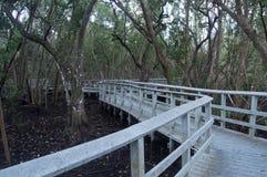 Mangrovensumpf bei Ebbe Stockbilder