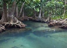 Mangrovenwälder mit Fluss lizenzfreies stockbild