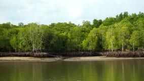 Mangrovenwälder in Thailand stock footage