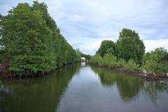 Mangrovenwald Lizenzfreie Stockfotos