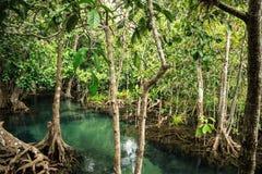Mangrovenwald Stockfoto