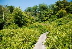 Mangrovenwald Stockbild