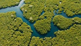 Mangrovenwald in Asien Insel Philippinen Siargao lizenzfreie stockfotografie