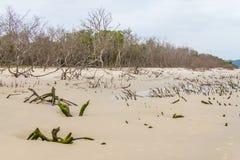 Mangrovenwald in Daniela-Strand lizenzfreie stockbilder