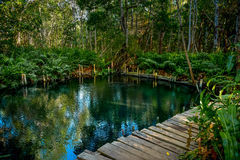 Mangrovenwald durch den Ria Celestun See Lizenzfreie Stockbilder