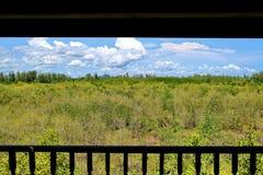 Mangrovenwald, huahin, Turm Stockfotografie