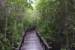 Mangrovenwald und die Brücke stockbild