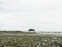 Mangrovenwald und die einsame Insel Stockfoto