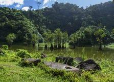 Mangrovenwald und tropischer See zwischen Bergen Seltene botanische Spezies der exotischen Natur Lizenzfreie Stockbilder