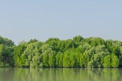 Mangrovenwalderhaltung stockbilder