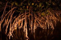 Mangrovenwurzeln mit Rankenfußkrebsen mit Reflexion nachts lizenzfreie stockbilder