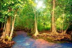 Mangroves Royalty Free Stock Images