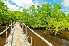 mangroves Royaltyfria Foton
