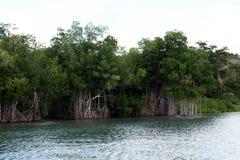 Mangroves Stock Photos