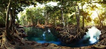 mangroves royaltyfri fotografi