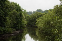 Mangroves Stock Photos