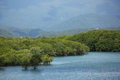 mangroves arkivbild