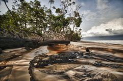 Mangroves in a beach in Nyonie, Gabon Royalty Free Stock Photography