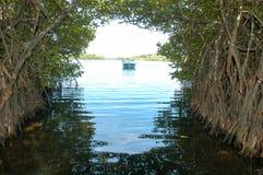 The mangroves of Bentota in Sri Lanka Stock Images