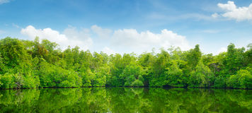 Mangroves and blue sky Stock Image