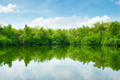 Mangroves and blue sky Stock Photos